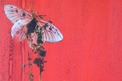 """""""Papillon sur rouge"""""""